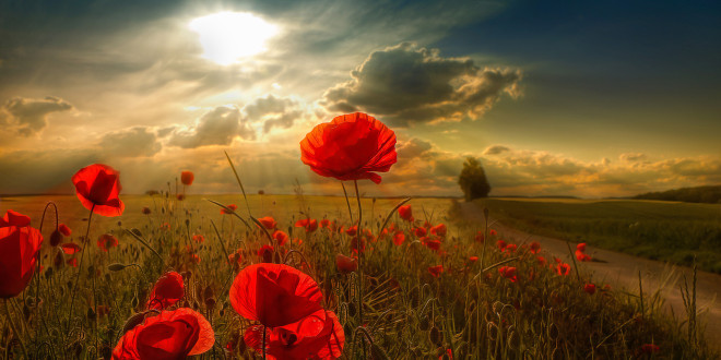 free_wallpaper_of_beautiful_natural_scenery_bright_red_flowers_in_dusk-660x330.jpg