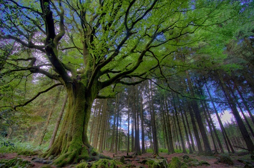 09314b96de-2014-Viaje a los bosques más bellos del mundo-Broceilande.jpg